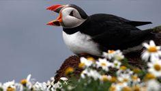 Fauna+And+Flora+International | Meet the Scots | Year of Natural Scotland 2013