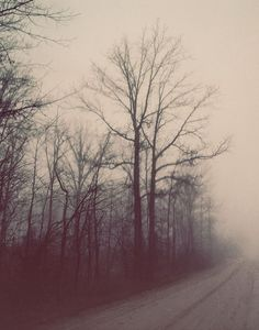 Ethereal Nature Photography, Winter Forest, Dreamy Color, Autumn, Fog, Bare Branches, Trees, Foggy Road Landscape Photograph on Etsy, $30.00