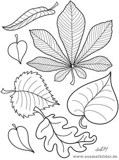 Images for coloring autumn - Coloring Pages Thanksgiving Crafts, Fall Crafts, Coloring Pages For Kids, Coloring Books, Art For Kids, Crafts For Kids, Leaf Template, Templates, Pattern Coloring Pages