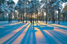 Sun shinning true the forrest! #wintersun