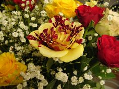 Yellow Roses Meaning | Gorgeous Roses: The Meaning of Rose Colors [35 PICS]