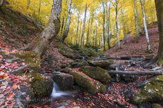 in the forest by nejdetduzen. @go4fotos