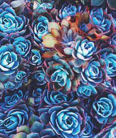 this series of succulents is just beautiful.  {via justina blakely}