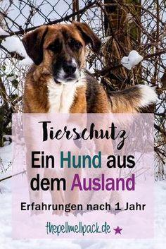 Hund aus dem Tierschutz -- Erfahrungen nach einem Jahr mit einem Straßenhund aus dem Ausland   Hund   Verhalten   Ausland   Tierschutz   Adopt don't shop   thepellmellpack.de