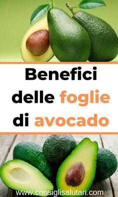 foglie dimagranti di avocado
