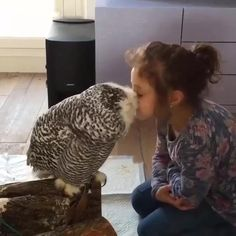 An unexpected visitor who loved Estelle Cute Wild Animals, Cute Funny Animals, Animals For Kids, Animals Beautiful, Cute Animals Kissing, Funny Owls, Funny Parrots, Cute Animal Videos, Cute Animal Pictures