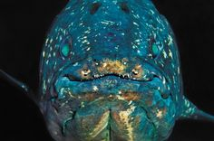 The genes of an ancient fish, the coelacanth, have much to reveal about our distant past.