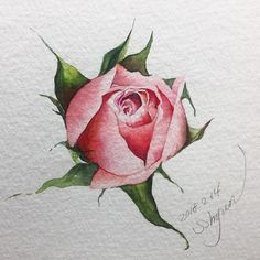 339 Likes, 6 Comments – Today is a gift! Watercolor Tips, Watercolor Artwork, Watercolor Cards, Watercolor Flowers, Drawing Flowers, Botanical Drawings, Botanical Art, Art Floral, Gouache