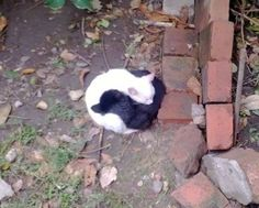14 Pictures of Yin And Yang Cats That Look Purr-fect Together