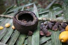 Resultado de imagem para sementes da floresta Castanha do Pará ou Castanha do Brasil