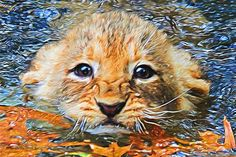 First Swim - By Will Barger #willbargerarts #Lion #Cubs #twitart #painting