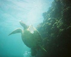 Fotos del viaje a Hawai | Insolit Viajes