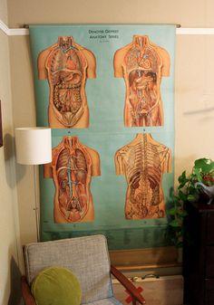 Vintage Anatomy Posters!