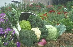Monthly Garden Calendar for Pacific Northwest United States | Rodale's Organic Life