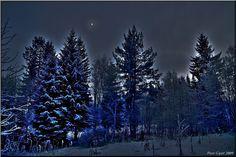 https://flic.kr/p/71ADT4 | Night Forest | Finland. Parkano. Jan 2009.