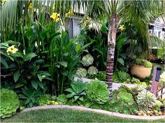 says - This seems like a more tropical but mixed with succulents and more . Jenny says - This seems like a more tropical but mixed with succulents and more ., Jenny says - This seems like a more tropical but mixed with succulents and more . Florida Landscaping, Tropical Landscaping, Landscaping With Rocks, Front Yard Landscaping, Landscaping Design, Canna Lily Landscaping, Palm Trees Landscaping, Tropical Garden Design, Tropical Backyard