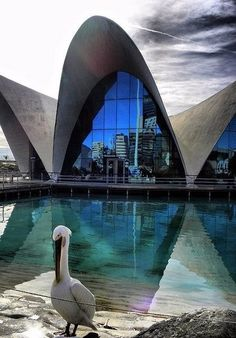 Oceanográfico, Valencia, Spain by Felix Candela Great Places, Places To See, Beautiful Places, Worlds Of Fun, Around The Worlds, Felix Candela, Valencia City, 24. August, Portugal