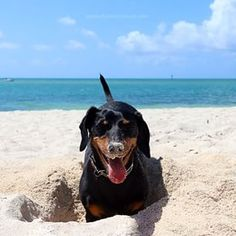 Happy in the Sand ☺️