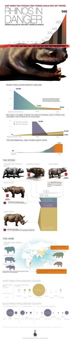 Rhinos in Danger: Infographic