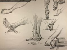 Sketch of the day: Draw the f**k out ofanimals