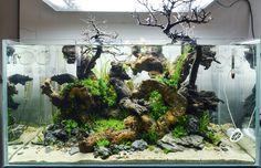 fuck-yeah-aquascaping: The first day of my new 90x45x45 tank — yihhaa #aquarium #aquascapeおぉ...これはみごと。底砂には、K砂をよろしく(^^)。