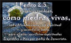 Resultado de imagen para 1A. pEDRO 2:5
