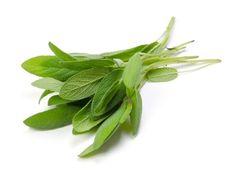 Salie: een Godsgeschenk voor je lichaam   Salie   Salvia officinalis   gezondheidsvoordelen van salie
