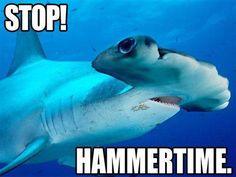 Funny Hammerhead Shark's Favorite Song #sharkweek Giggles Grins Pediatric Dentistry   #Southlake   #TX   www.gigglesandgrins.org