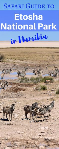 Safari guide to Etosha National Park in Namibia | Waterhole safari in Etosha National Park Namibia *********************************** #Namibia #EtoshaNationalPark #Africansafari #Wildlife