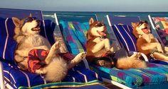 DOGS... love it!!!