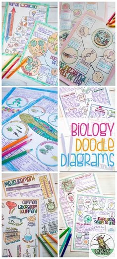 Biology Doodle Diagram Notes in The Classroom Biology Doodle Diagram Notes in The Classroom & Science and Math with Mrs. Lau The post Biology Doodle Diagram Notes in The Classroom & Teaching Science appeared first on Formation . Biology Classroom, Biology Teacher, High School Biology, Science Biology, Teaching Biology, Middle School Science, Science Education, Life Science, School Classroom