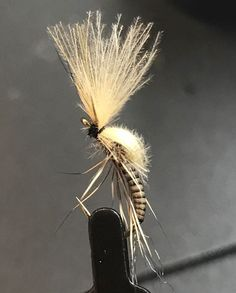 Quill CDC Emerger