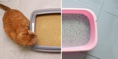 There are a lot of options when it comes to cat litter. We break down each different type, and what you should look for when choosing your litter. Clay Cat Litter, Clay Cats, Litter Box, Natural Cat Litter, Different Types Of Cats, Solid Waste, Bentonite Clay, Toilet Bowl, Food Industry