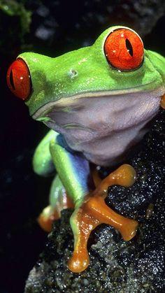 Beautiful Frog                                                                                                                                                                                 More