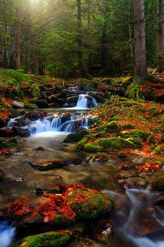 Want to get lost in it all ...  Washout by *FlorinALF on deviantART