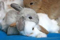 Soooo...I don't usually re-pin this kinda stuff-but who could resist a pile of bunnies!?