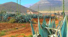 Cortijo del Fraile, un lieu d'histoire (parc naturel de Cabo de Gata, en Espagne)