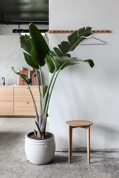 Mooie plant met grote, betonlook pot.