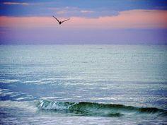 Good morning ~ Miramar Beach, Florida
