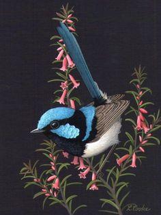 Large blue wren lyn cooke bluethumb art