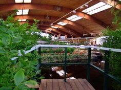 Das Blumenreich In Wiesmoor Setzt Sich Aus Einer Wunderschonen Parkanlage Und Einer Blumenhalle Zusammen Pflan Bauerngarten Ostfriesland Urlaub Ostfriesland