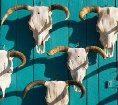 cowskulls n' turquoise
