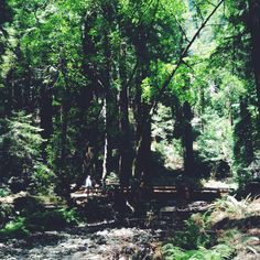 Redwood National Park. And all that I can think about is my lost friend