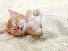 Sleep, little baby.