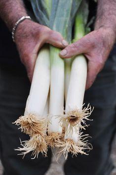 Cultivateur et fournisseur de vitamines Zut je n'ai plus de poireaux ! A l'approche de l'hiver, dès que certains légumes se font rares dans notre potager, je me fournis à la ferme de Braude sur la commune Le Taillan Médoc. Plantés à perte de vue, sur...