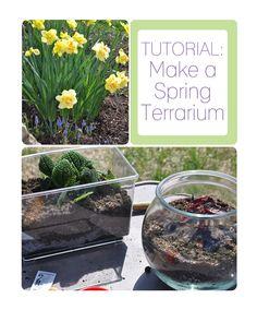 spring terrarium #terrarium