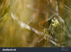 Butterfly on Grass with Blurred Soft Background