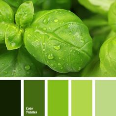 Color Palette No. Green Colour Palette, Color Palate, Design Seeds, Palette Verte, Monochrome Color, Color Stories, Color Theory, Colour Schemes, Warm Colors