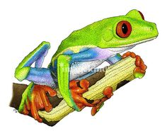 """""""Red-Eyed Tree Frog"""" by Roger Hall, Berkeley, CA // Fine art illustration of a Red-Eyed Tree Frog (Agalychnis Callidryas) // Imagekind.com -- Buy stunning, museum-quality fine art prints, framed prints, and canvas prints directly from independent working artists and photographers."""