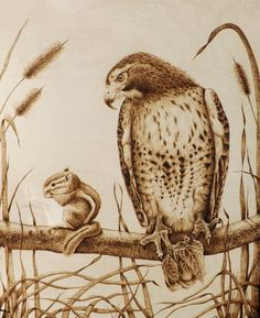 """""""Too Close for Comfort"""" Hawk eyeing a very confident chipmunk; 16 by 20 inches; Cara Jordan Animal Pyrography"""